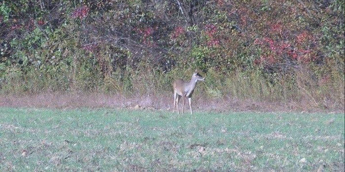 2015 Missouri Youth Deer Hunting Season to begin