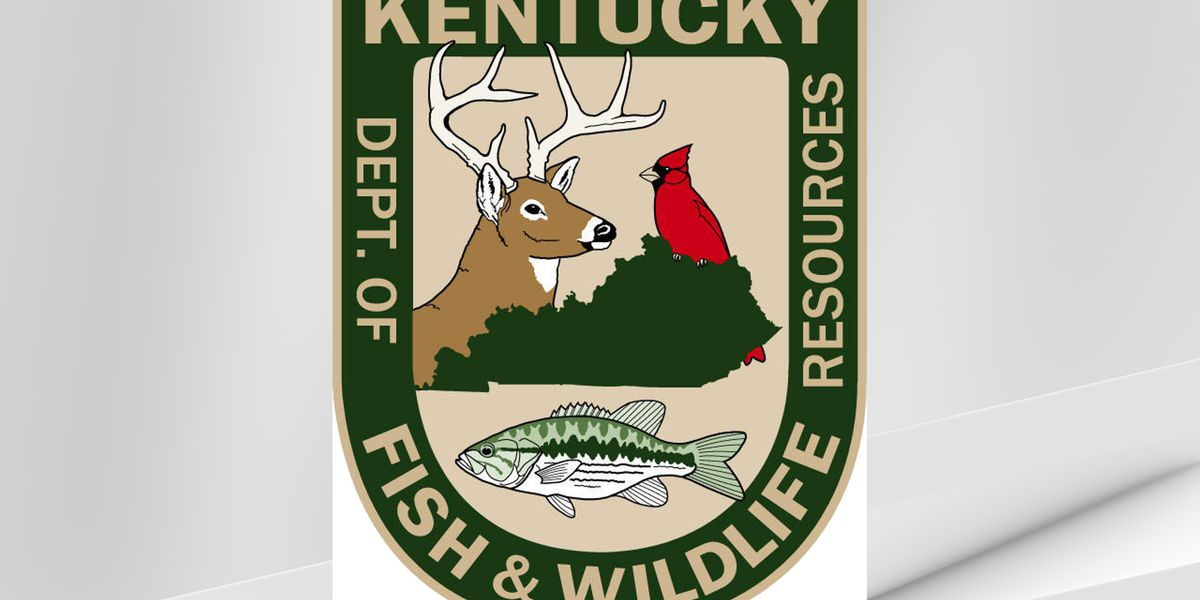 Reward offered for information on bull elk poaching in Knott Co.
