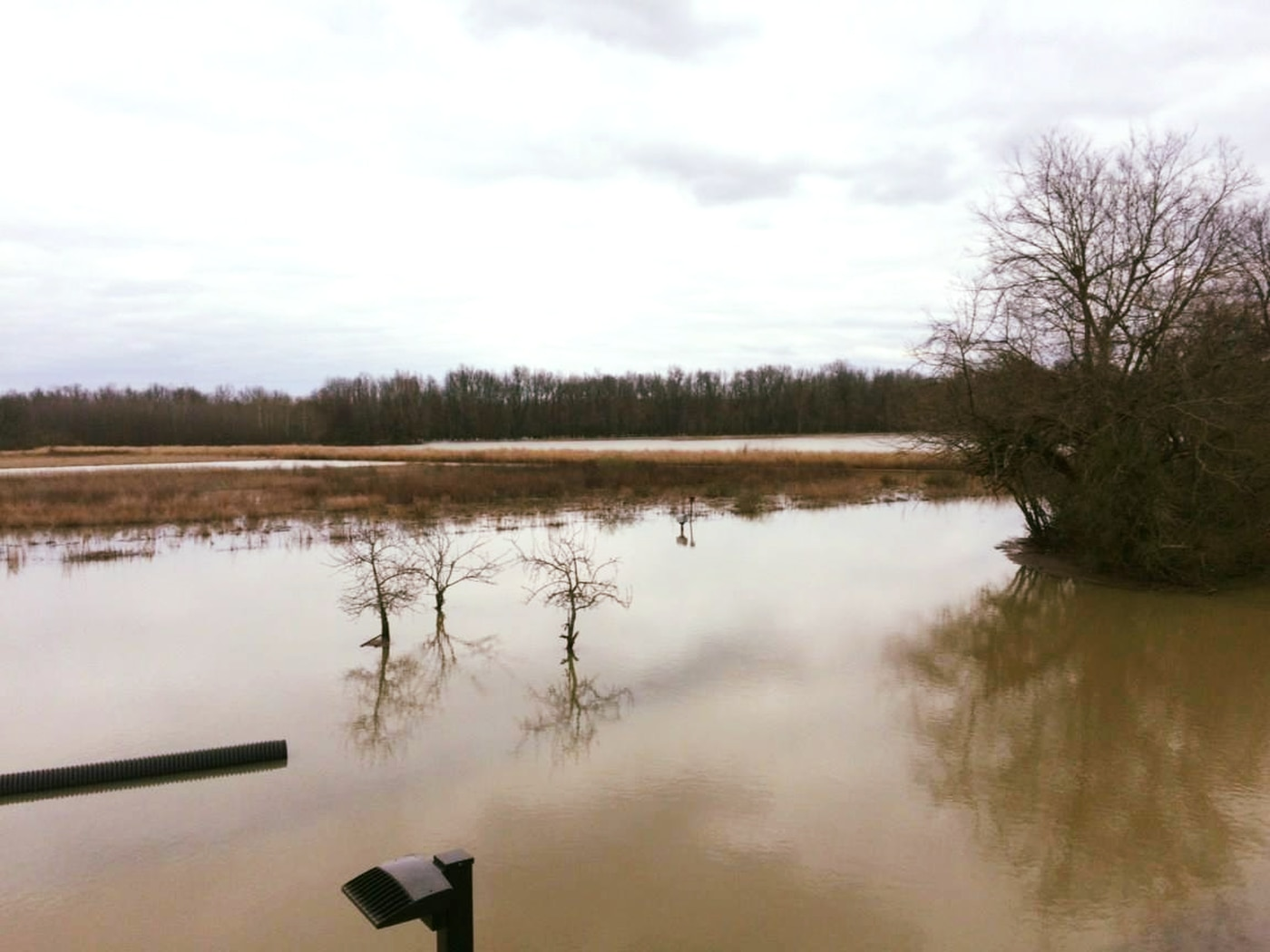 recent flooding to impact ballard wildlife area after reopening