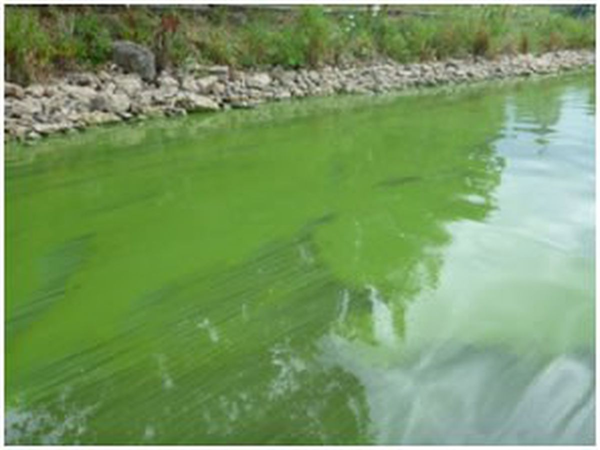 Illinois officials remind residents to be aware of blue-green algae on waterways