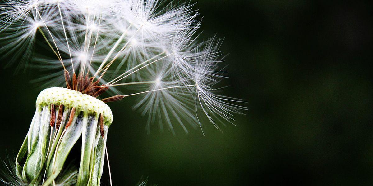 Sneezing this springtime due to seasonal allergies