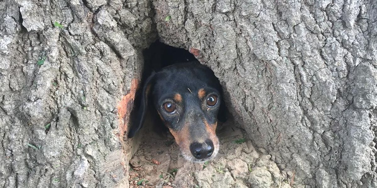 Ruff rescue: off duty troopers save dog trapped in tree in KY