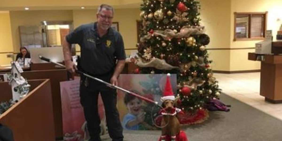 "Poplar Bluff Animal Control captures dog after ""attacking"" elf in funny Facebook post"