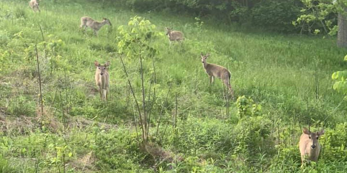 Don't get too close to the deer in your yard