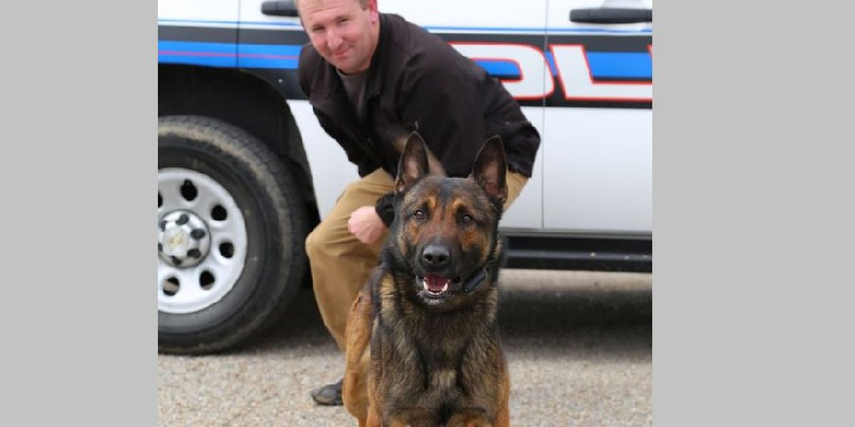 Mayor and police chief respond to delayed reporting of K9 shooting