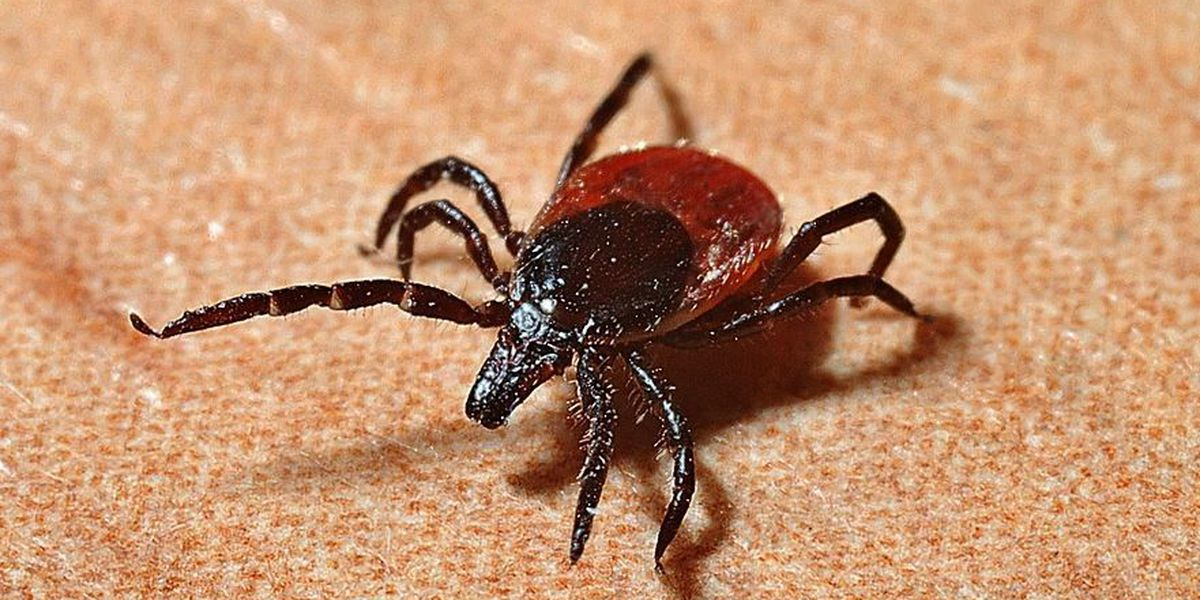 Tickborne illnesses on the rise in one Heartland county