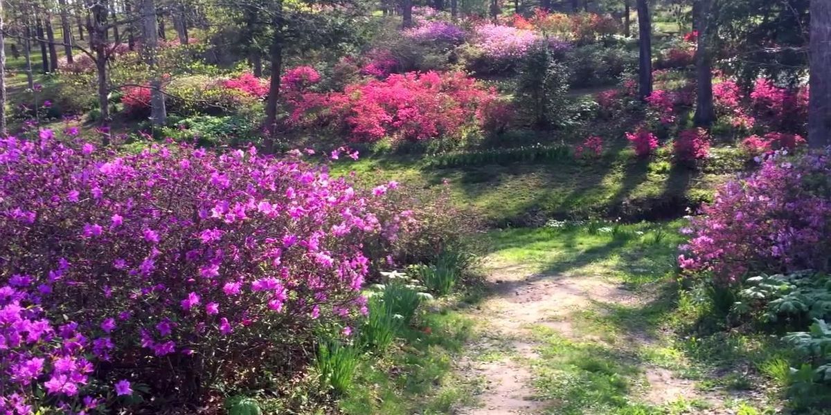 """A """"secret garden"""" in southeast Missouri blooms for all to see"""