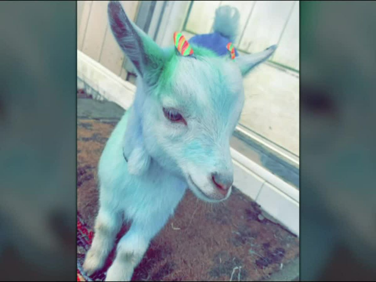 Alabama woman charged with stealing goat, dying its coat