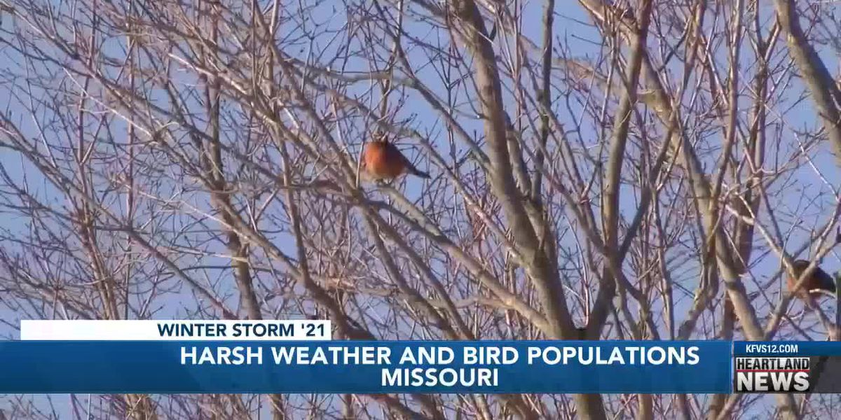 Mo. Dept. of Conservation: Cold weather to blame for fewer birds, bluebirds