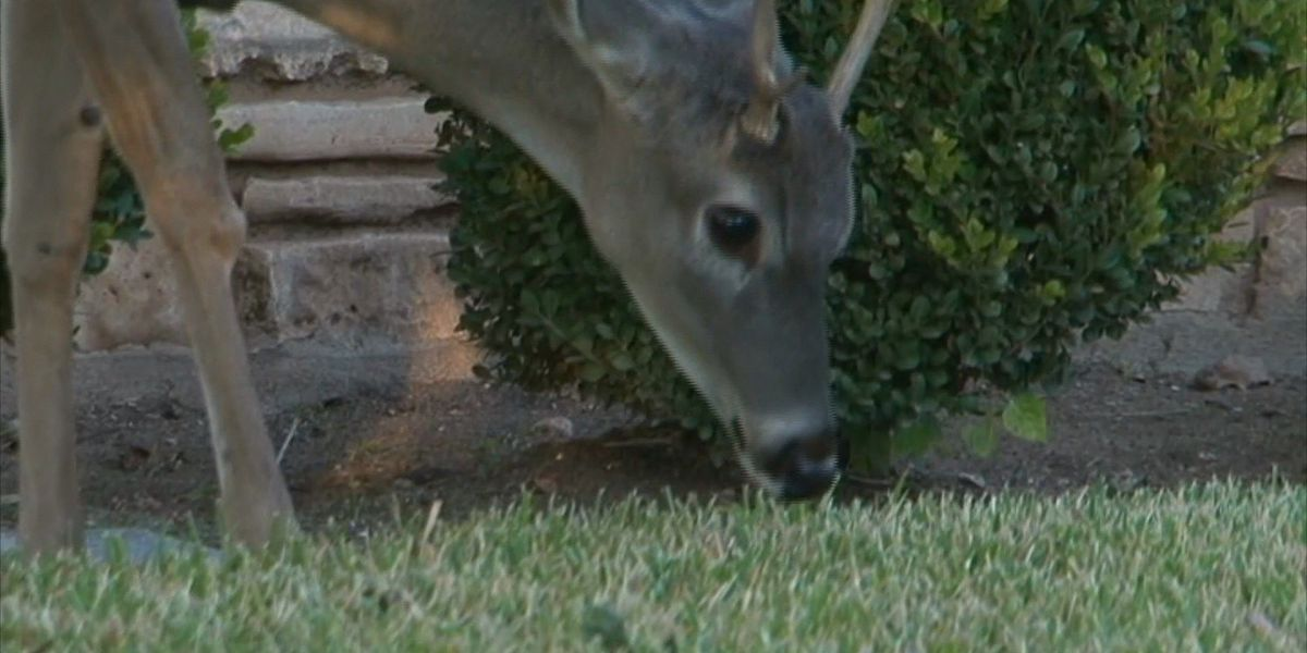 Prosecutor reminds MO deer hunters of Telecheck rules