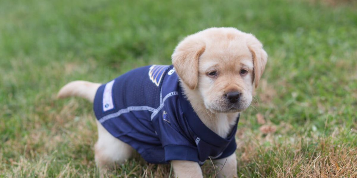 St. Louis Blues adopt puppy; you can help name him