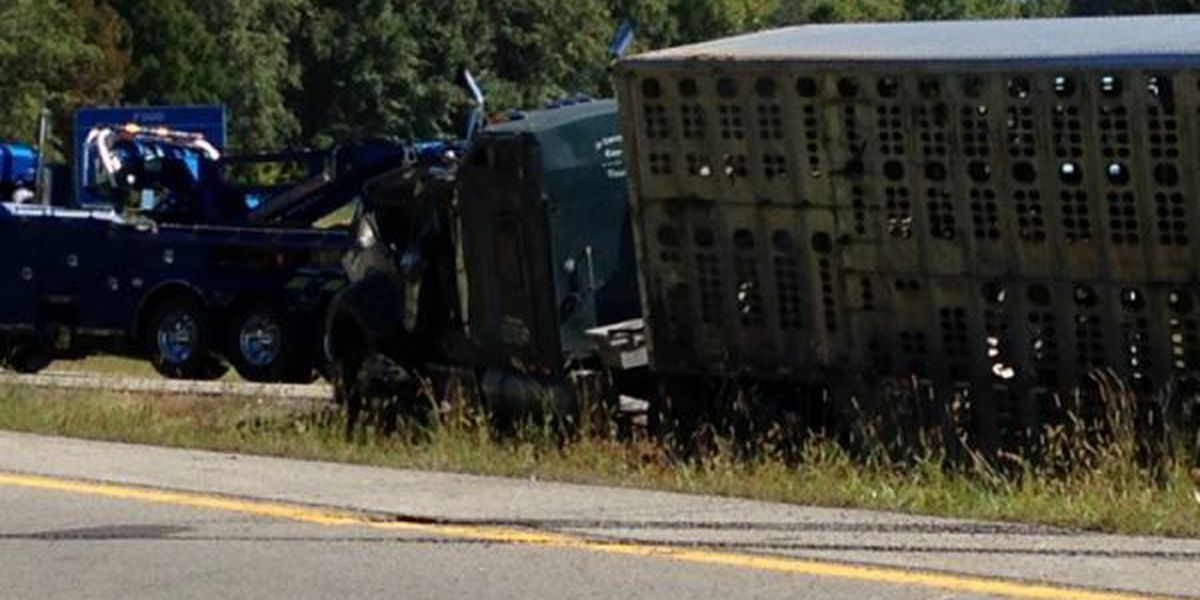 Cattle truck overturns in Jefferson County, IL