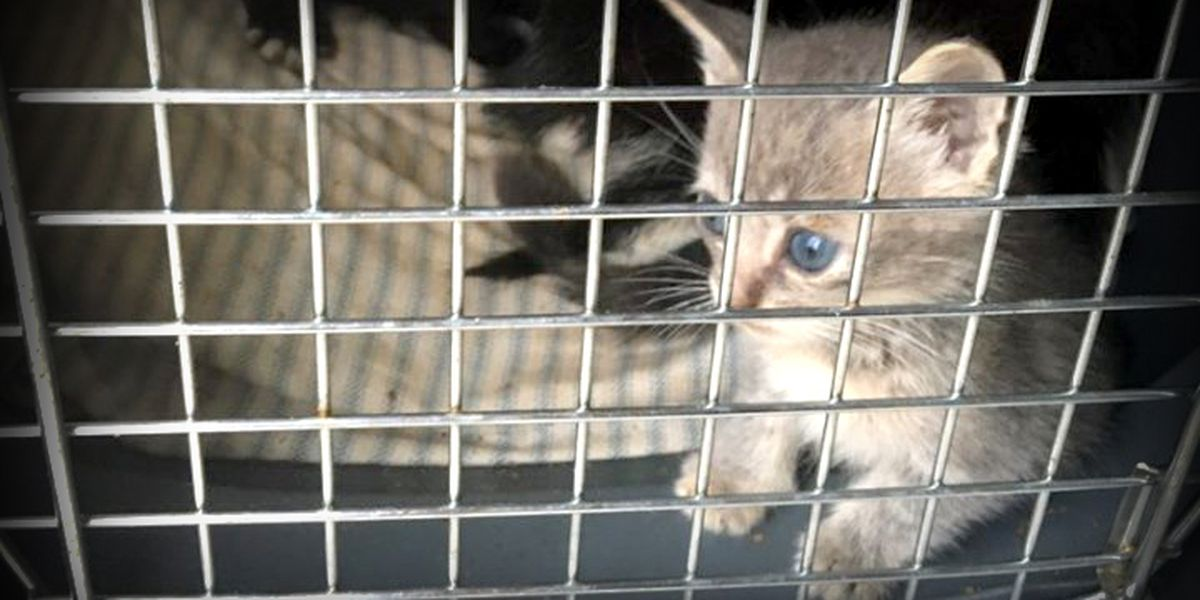 Mother and her kittens put in carrier, thrown out with trash in Portage County