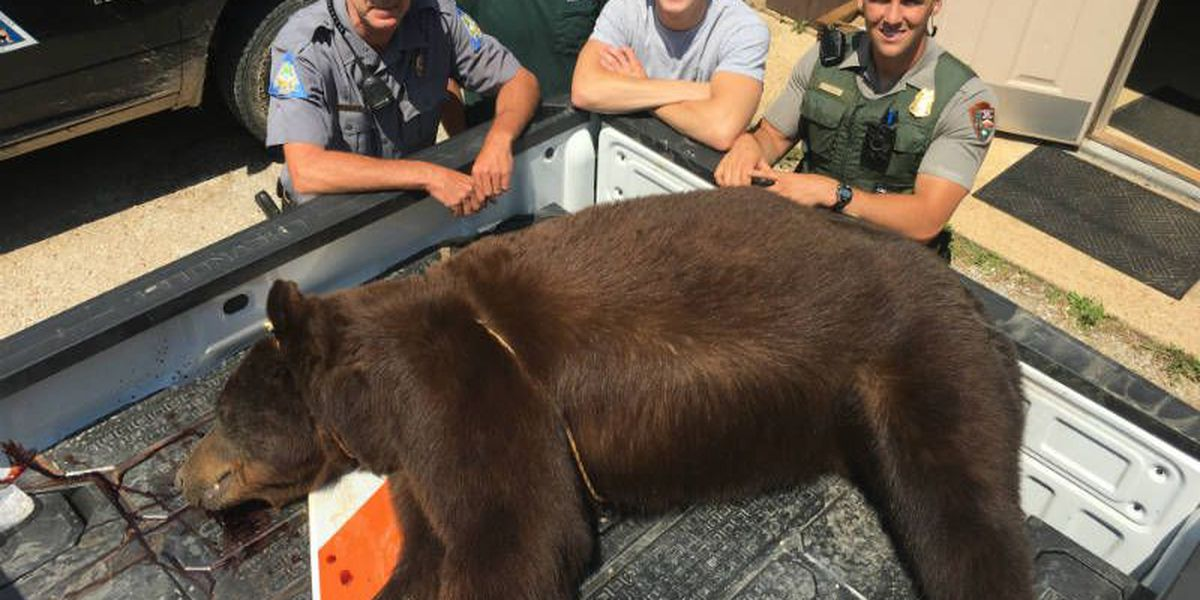 400-pound black bear found dead on Current River