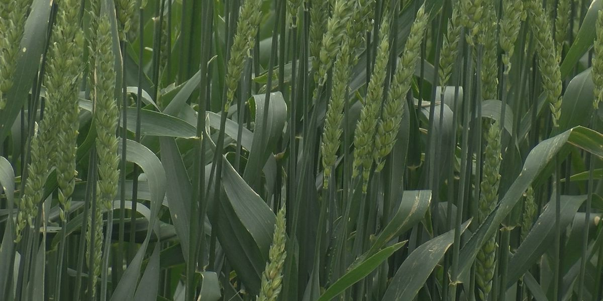 Heartland experts say the supply for crops is up but the demand isn't