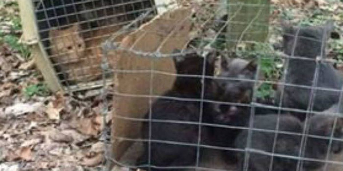 10 cats, kittens abandoned outside Jackson, MO animal shelter