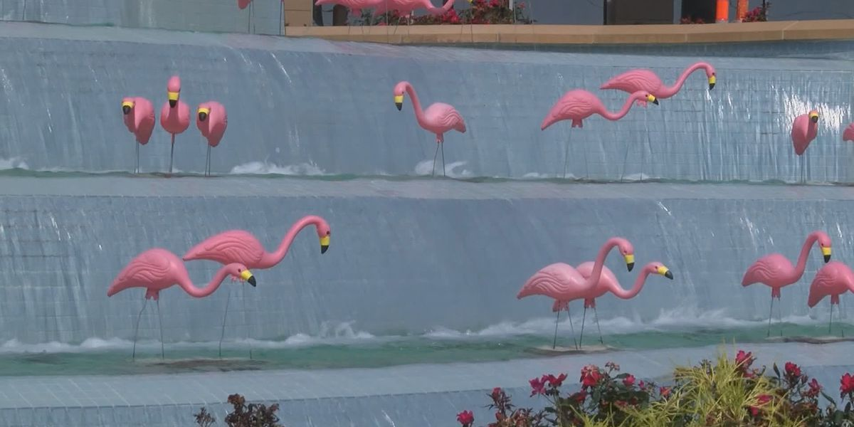 Flock of pink flamingos growing for COVID-19 survivors at hospital