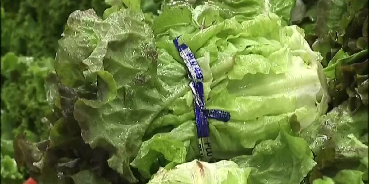 Romaine Lettuce Recall what you need to know