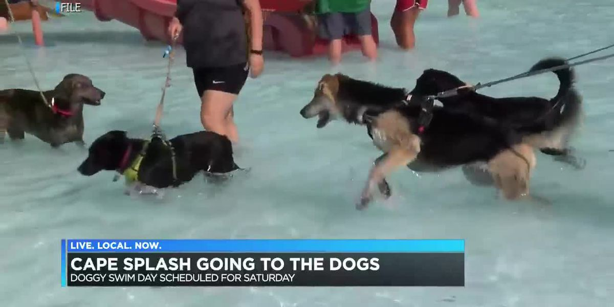 Doggy day at Cape Splash