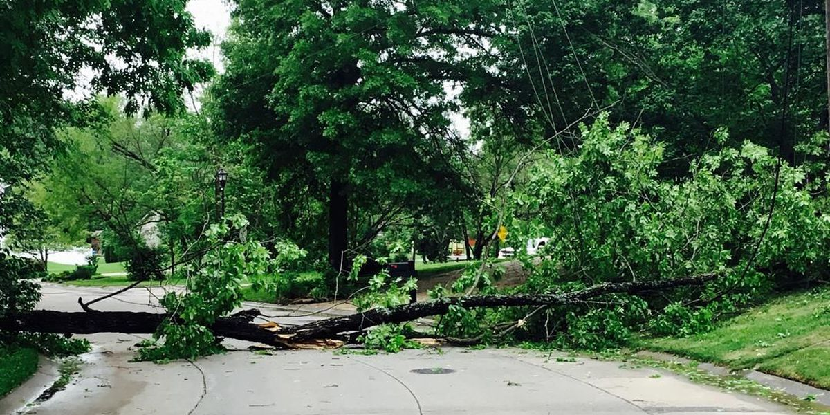 Downed tree pulls down power line in Cape Girardeau