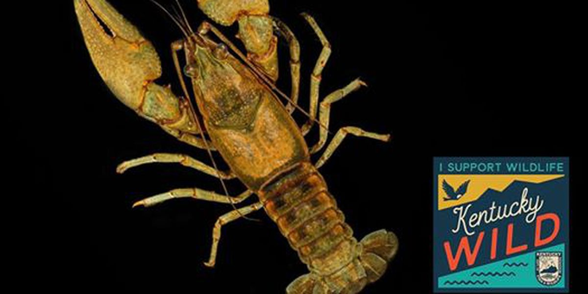 Sponsorship wanted to name new species of Crayfish in Ky.