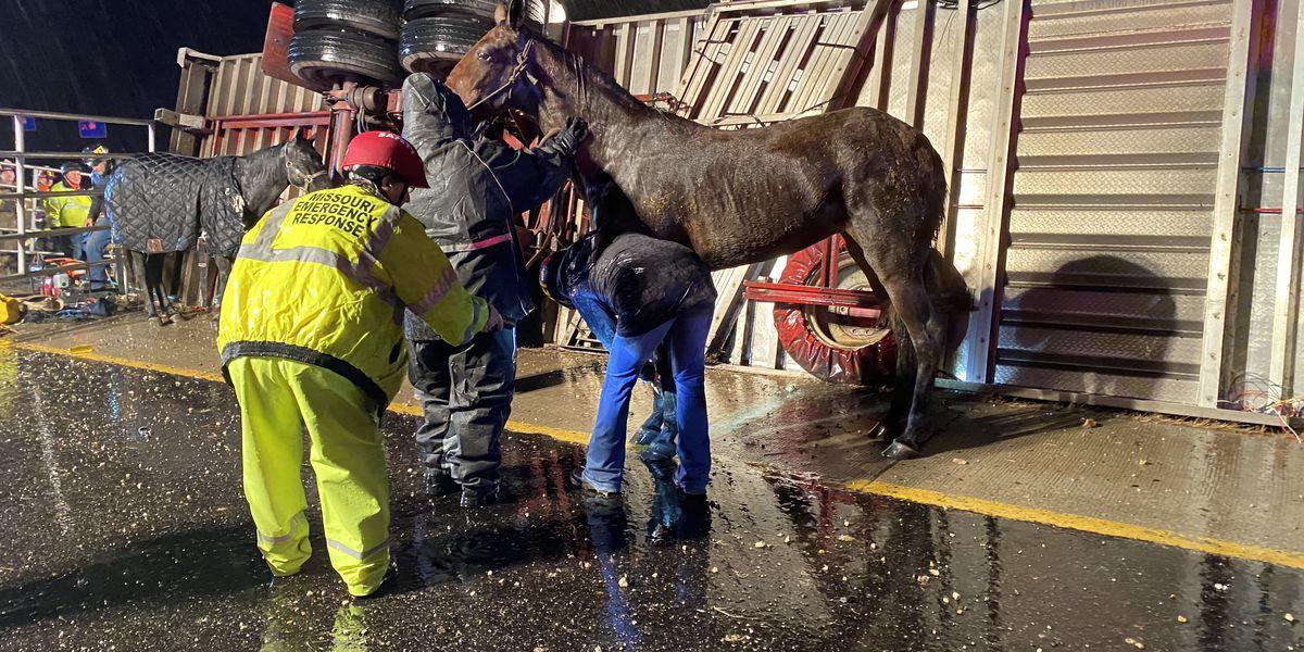 11 horses rescued, several dead after horse trailer crash in Franklin Co., Mo.