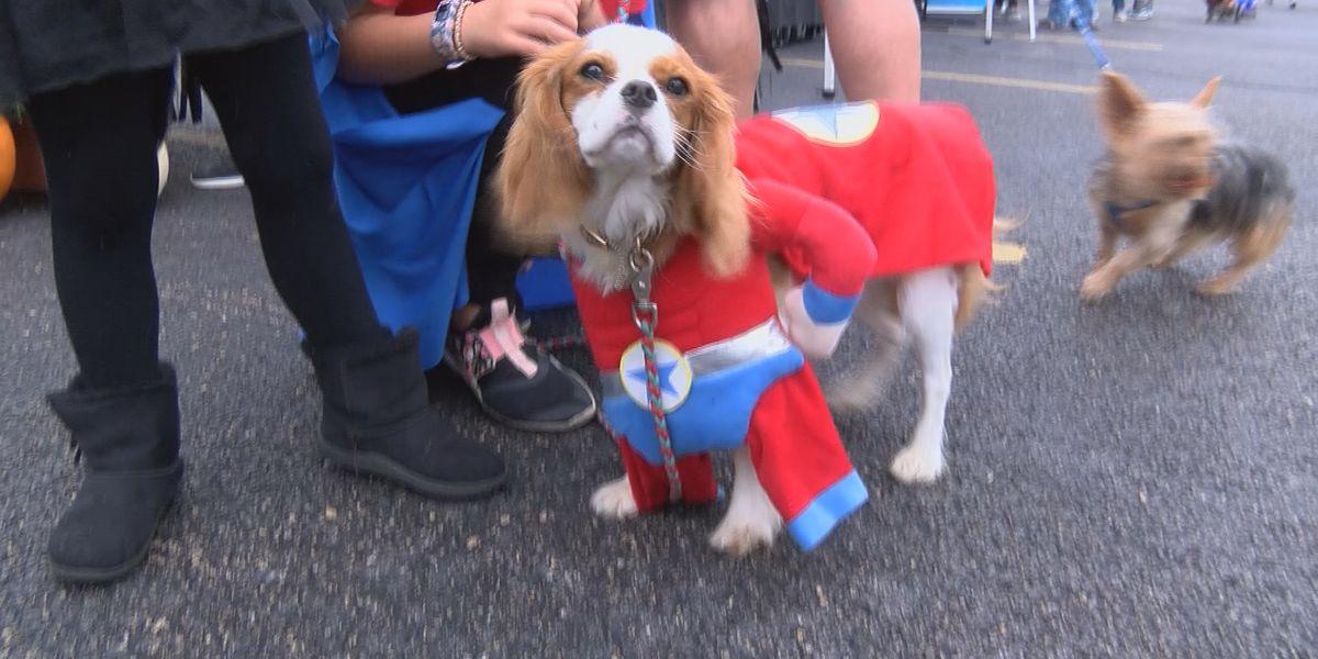 10th annual Pet Fest held in Cape Girardeau