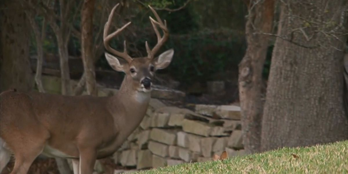 Young Mo. hunters harvest 18,158 deer in early youth portion