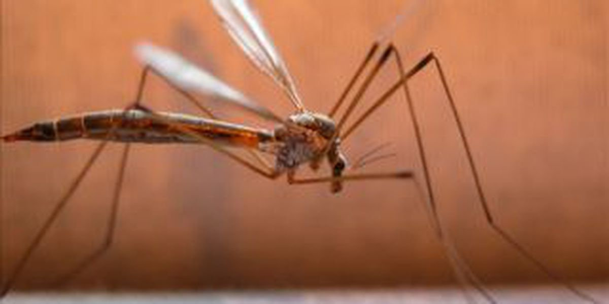 Illinois health departments given grants to test for West Nile virus