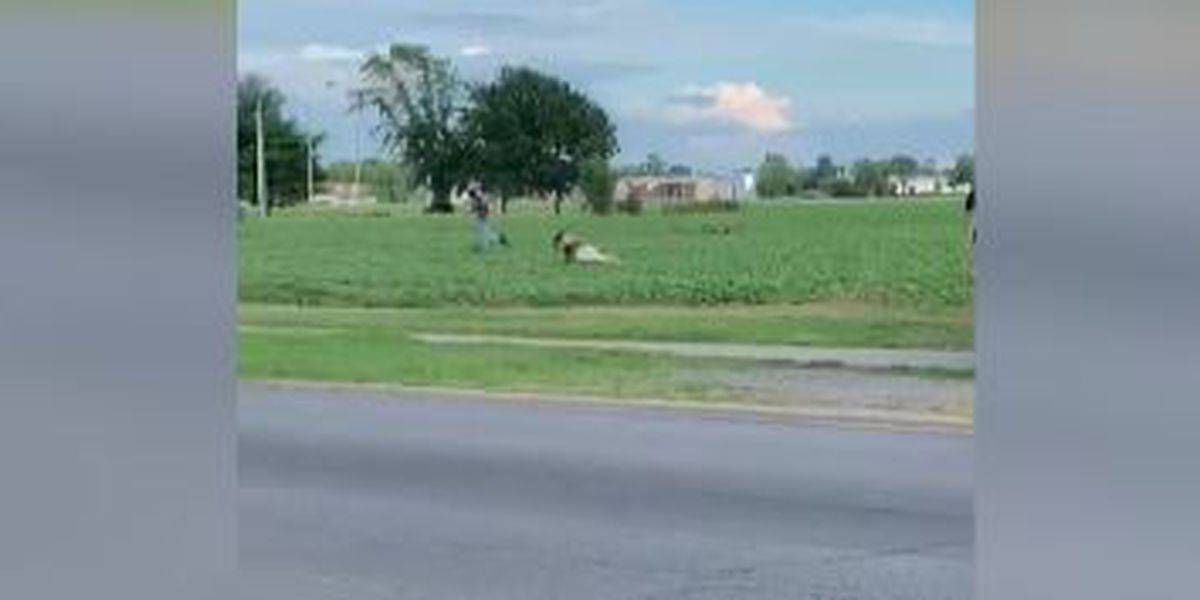 Goat on the loose in Sikeston, Mo.